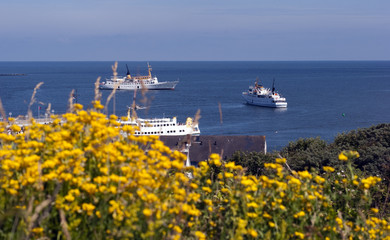 Yellow flowers and ferry service