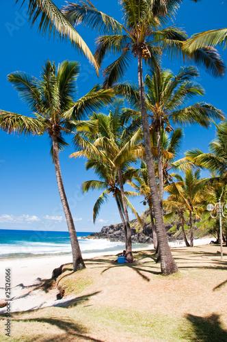 Palmier Réunion