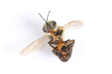 A bee was die, on white paper.