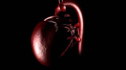 3d human heart beating in High Definition