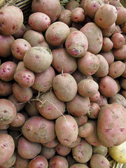 Organic potatoes at outdoor Farmers Market
