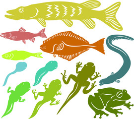 Set of a various fish and frog