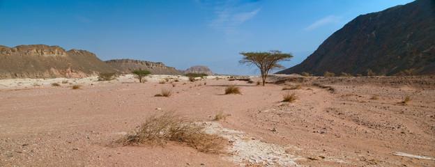 desert views in Timna Park