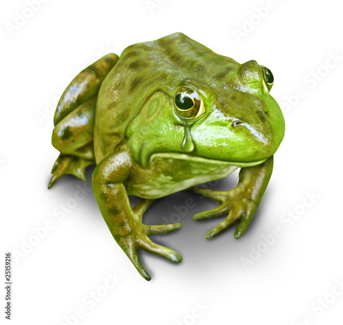 polluted environment green frog