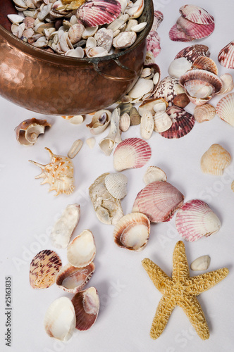 copper pot, star and seashell collection