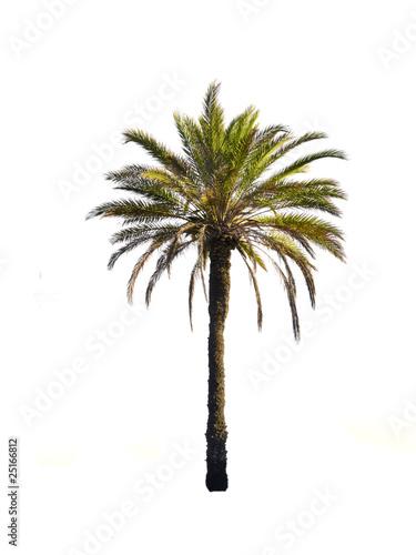 Fotobehang Palm boom le palmier