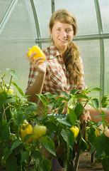 girl picking  pepper