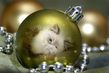 Green Bauble Kitten