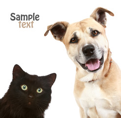 Cat and dog, on a  white background