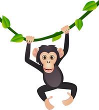 Mignon chimpanzé