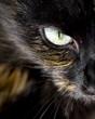 Cats Eye close up