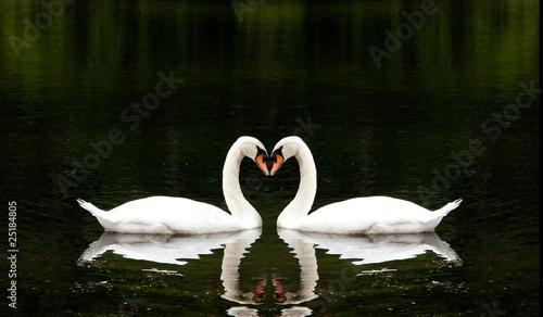 Fotobehang Romantic Swans