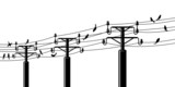 Birds on powerlines poster