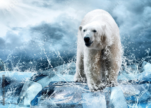 Fototapety, obrazy : White Polar Bear Hunter on the Ice in water drops.