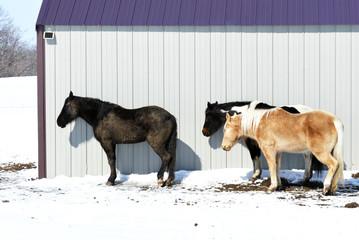 Three Horses by Modern Barn