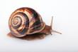 lenta spirale