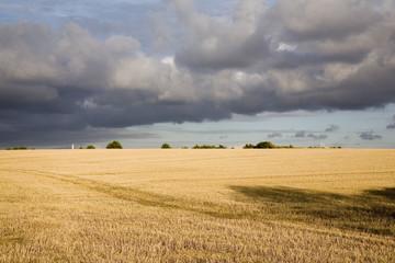 france,85 : ombre dans les blés sous les nuages