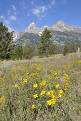 Teton Mountains im Sommer