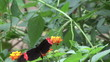 black and pink butterfly on a flower