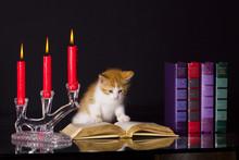 Bibliothek Katze