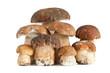 Funghi porcini - Boletus mushrooms
