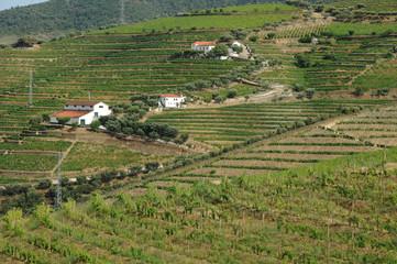Portugal, vignoble de la vallée du Haut Douro