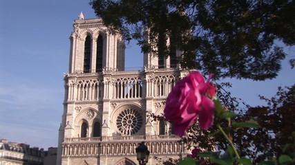 Rose with Notre Dame de Paris on the background