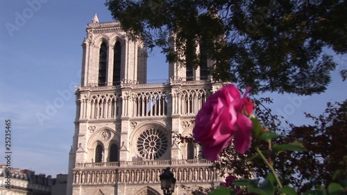 Rose with Notre Dame de Paris on the background