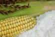 Leinwanddruck Bild - Maismehl  Maisstärke Mais (Zen Mays)
