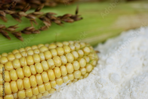 Leinwanddruck Bild Maismehl  Maisstärke Mais (Zen Mays)