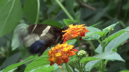 close-up of butterfly landing on a flower