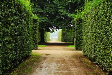 Hedge in Castlegarden