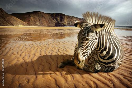 Zdjęcia na płótnie, fototapety na wymiar, obrazy na ścianę : Beach Zebra