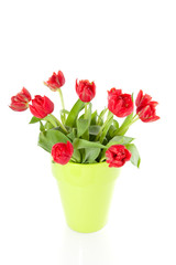 red tulips in a lime green vase isolated on white background