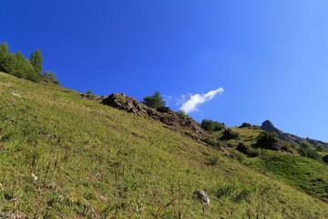 prairie de montagne