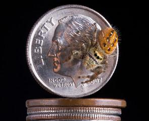 Spider on money