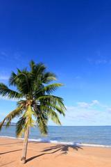 beach , Coconut and blue sky