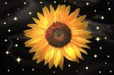 Soleil nocturne poster