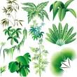 Piante e Vegetazione Tropicale-Exotic Plants and Trees-Vector