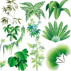 Piante e Vegetazione Tropicale-Exotic Plants and Trees-Vector
