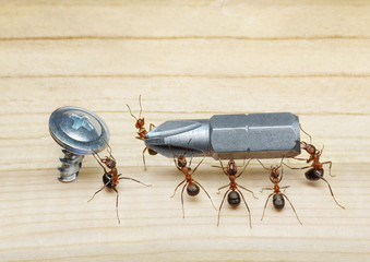 team of ants carries screwdriver to screw, teamwork