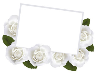 White roses and white paper card. Vector.