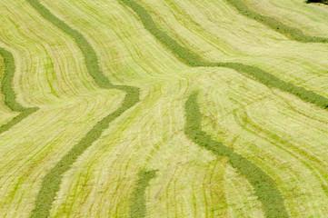 Landwirtschaft. Ernte