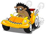 Fototapety hedgehog the taxi driver