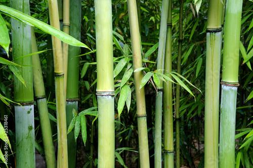 Foto Spatwand Bamboe green bamboo