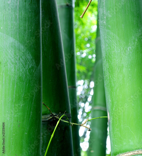 Papiers peints Bambou green bamboo