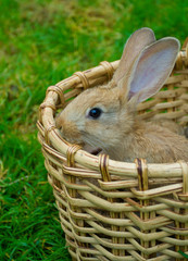 small bunny in basket