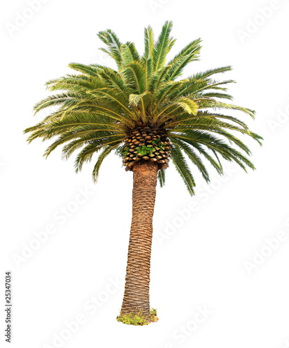 Fotobehang Palm boom Palmier