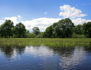 Wetlands landscape in National Park in Belarus