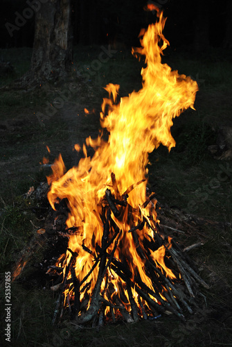Burning fire in the wood